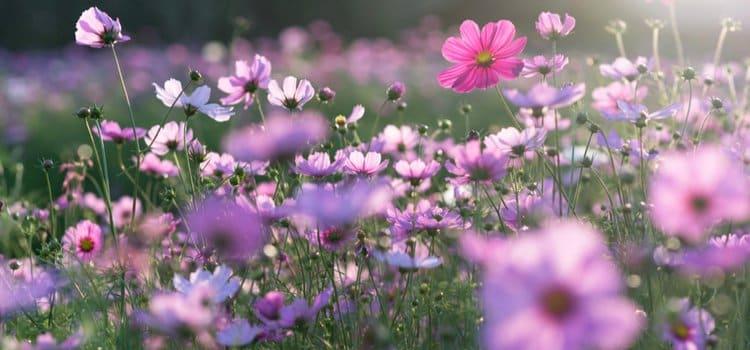 Αντιμετώπιση Αλλεργιών την άνοιξη