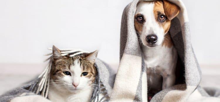 Διατροφή Κατοικίδιων - Μικρές γρήγορες συμβουλές για τη σωστή διατροφή της γάτας ή του σκύλου μας