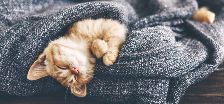 Πόσο σημαντικός είναι τελικά ο βραδινός ύπνος για την υγεία μας;