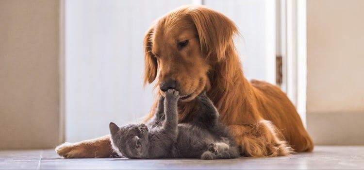 4 Οκτωβρίου - Παγκόσμια Ημέρα Των Ζώων