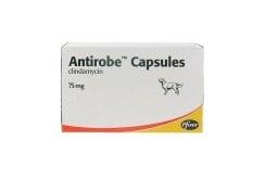 Pfizer Antirobe 75 mg για τη Θεραπεία Μολυσμένων Τραυμάτων, Αποστημάτων & Λοιμώξεων της Στοματικής Κοιλότητας & των Δοντιών των Σκύλων, 16 caps